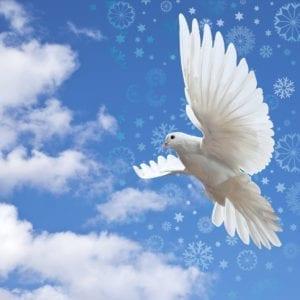 Snowflake Dove